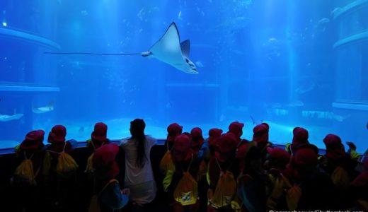 宿泊OKな全国の水族館11選!夜限定ナイトアクアリウムが魅力的すぎる