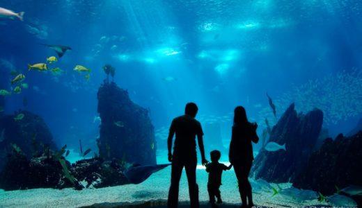 絶対にハズさない!金沢観光で行くべきおススメ度100%水族館5選