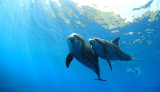 東京で野生のイルカに会える満足度120%の島「御蔵島」!