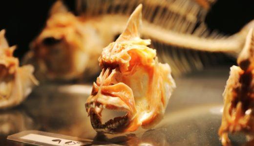 入場料金無料でアクセスOK !東京都内の魚の博物館が魅力的過ぎる