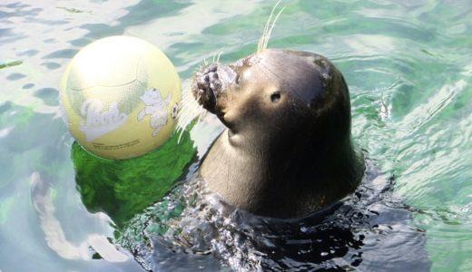 箱根に訪れたらアクセスしたい!箱根園水族館とふれあい動物園