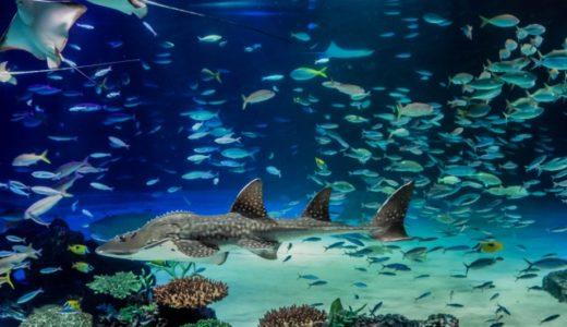 サンシャイン水族館七人ミサキが怖すぎる!続編がすでにスタート?