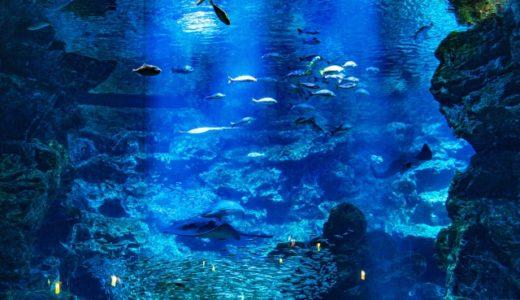 日本&世界で大きな水槽がある水族館はどこ?国内外トップ5を紹介!